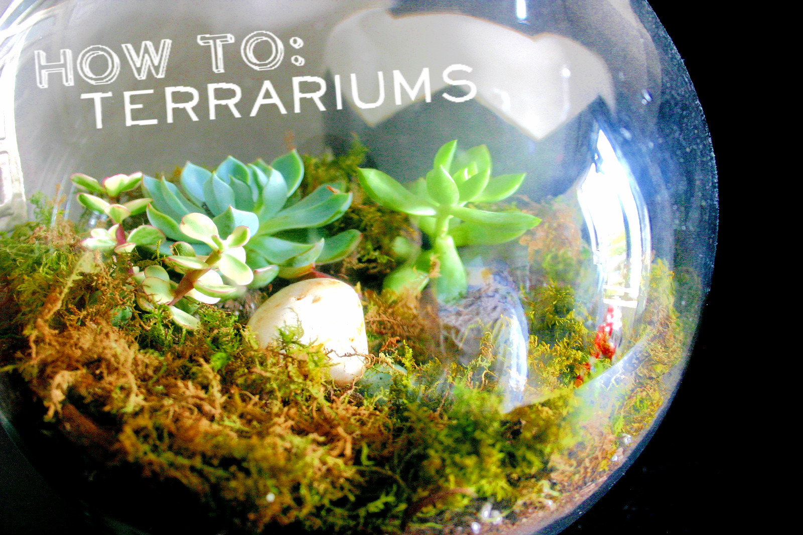 HOW TO: Build a Terrarium | Brick & Vine